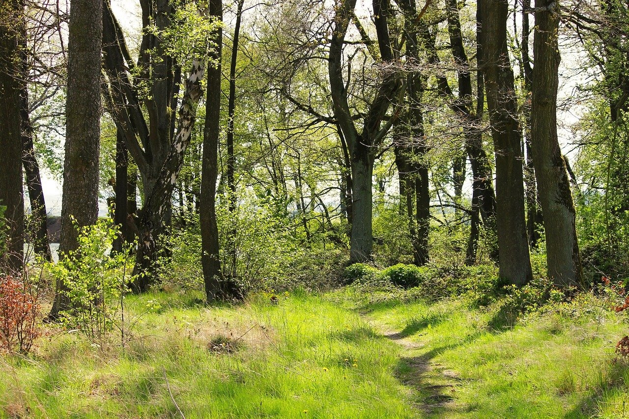 Waldbaden (Shinrin Yoku) zum Frühlingserwachen